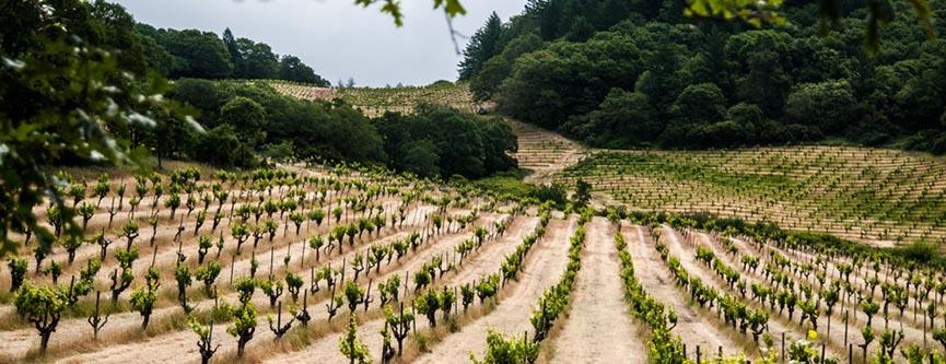 Mayacamas - Mayacamas Vineyards Mt Veeder Cabernet Sauvignon 2014