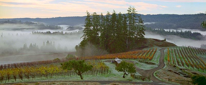 peay - Peay Sonoma Coast Chardonnay