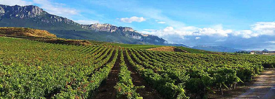 sierra cantabria - San Vicente Rioja