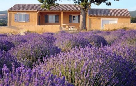 La Bernarde - La Bernarde Les Hauts du Luc Cotes de Provence Rose