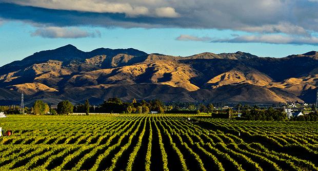 Matua - Matua Valley Marlborough Sauvignon Blanc
